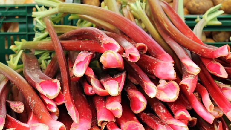 La rhubarbe bon pour la santé